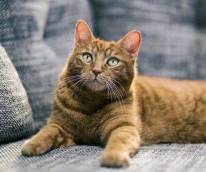 sofas para gatos